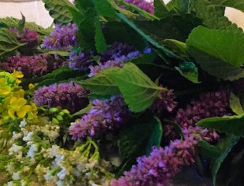 Anise Hyssop 2019 Herb of the Year